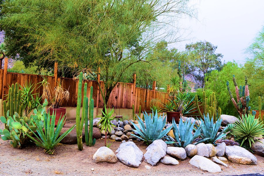 Create a Backyard Desert Oasis with These Tips