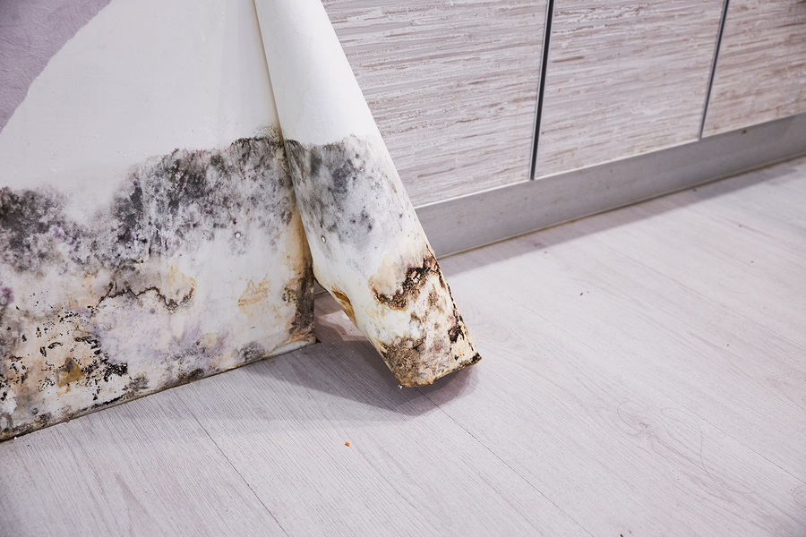 Follow This Home Maintenance Guide to Keep Mold from Growing in Your Home