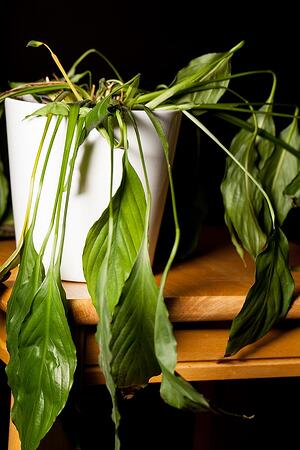 Preserve Your Indoor Plants with These Tips