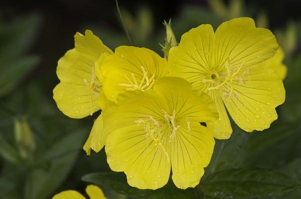 nine plants that stay beautiful in Las Vegas heat