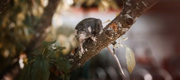 winter-pests.jpg